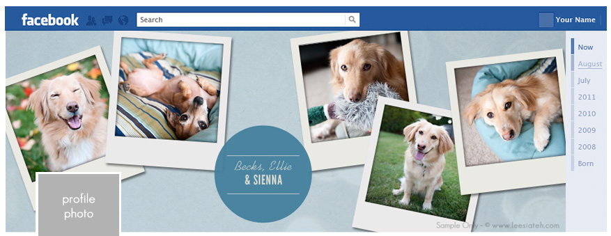 Facebook Timeline Covers  Atlanta Dog Photography  Pet Portraits